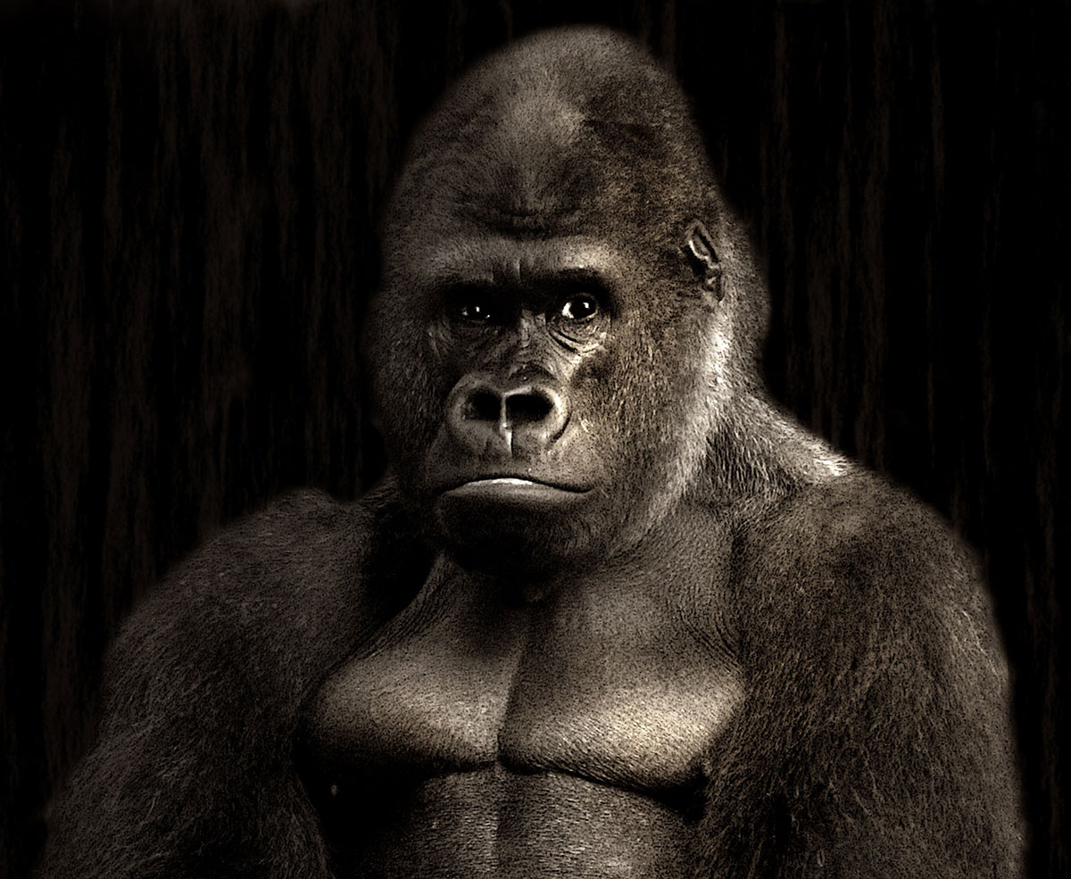 Ein Handy für den Gorilla!